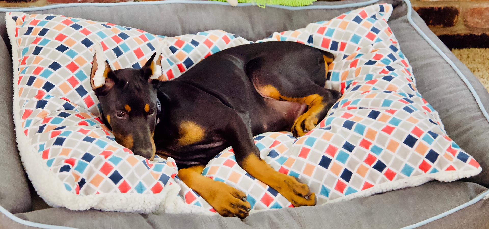 Atlas earned back his beds.