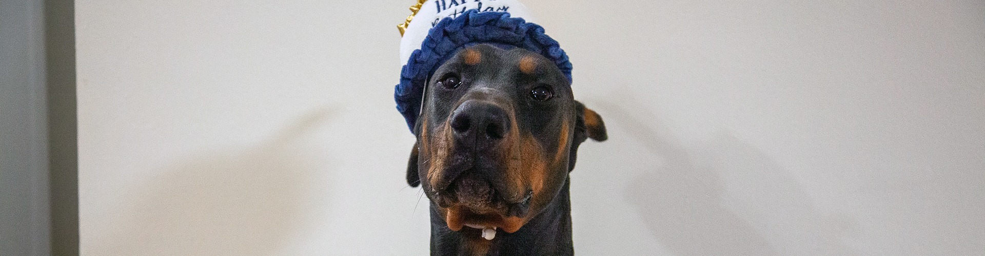 Atlas' first birthday